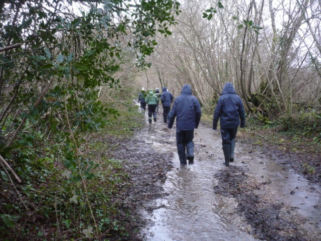 Walking down a Kingcombe track. That's right, it's usually a track - not a river..