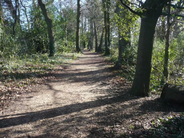 A Runners delight.. dappled sunlight on a woodland trail.