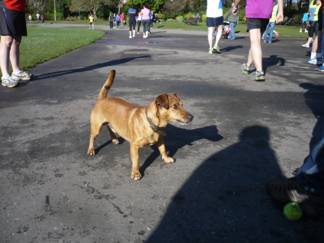 Max, parkrun dog, explorer dog or Wonderdog. He'll answer to any f them!