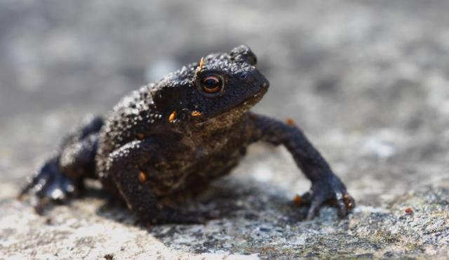 Toady, or toad. He answers to either.