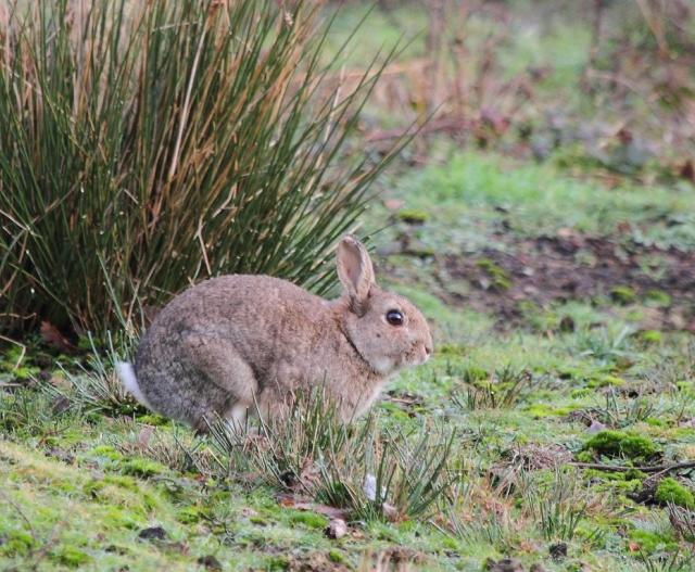 One of three that were grazing in the open a bit further along the track.